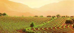 Laurea in Ingegneria Agroindustriale